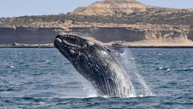 Puerto Madryn - Temporada baja 2021